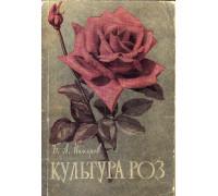 Культура роз в средней полосе СССР