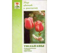 Тюльпаны: агротехника, дизайн, продажа