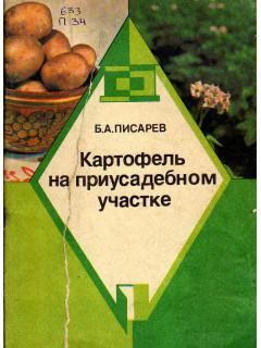 Картофель на приусадебном участке.