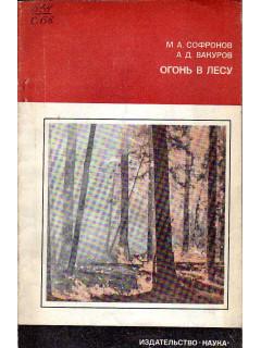 Огонь в лесу.