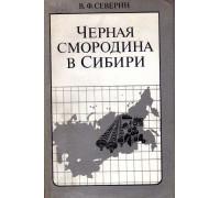 Черная смородина в Сибири: технология выращивания, заготовка и переработка.