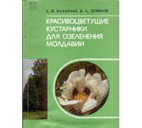 Красивоцветущие кустарники для озеления молдавии